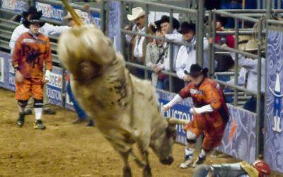 Houston Rodeo 2010