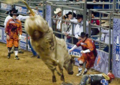 Houston-Rodeo-2010-28