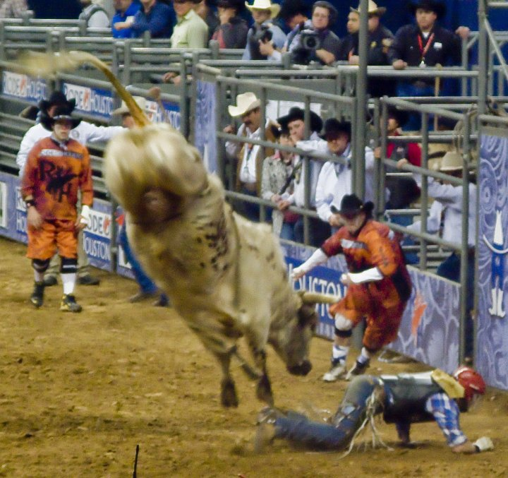Houston Rodeo 2010