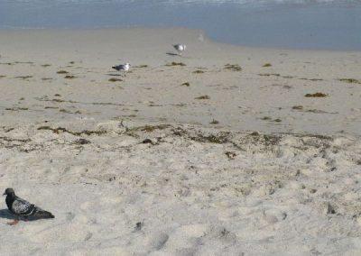 Miami-Beach-2009-10