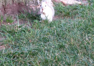 White Squirrel in Washington DC